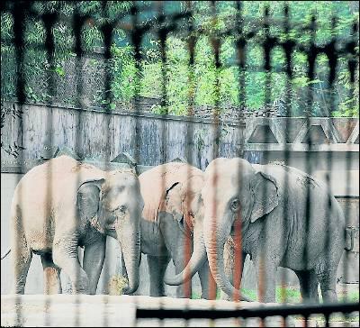 India liberará a los elefantes de zoos y circos